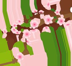 un cerisier odeur printemps
